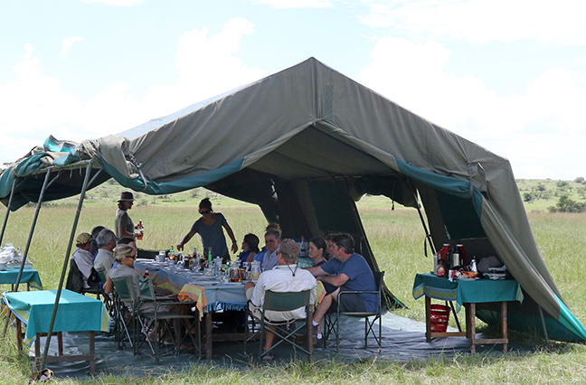 Stay and Do > African Safaris