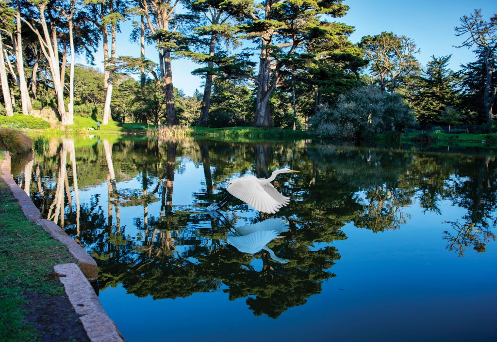 San Francisco's Golden Gate Park Turns 150